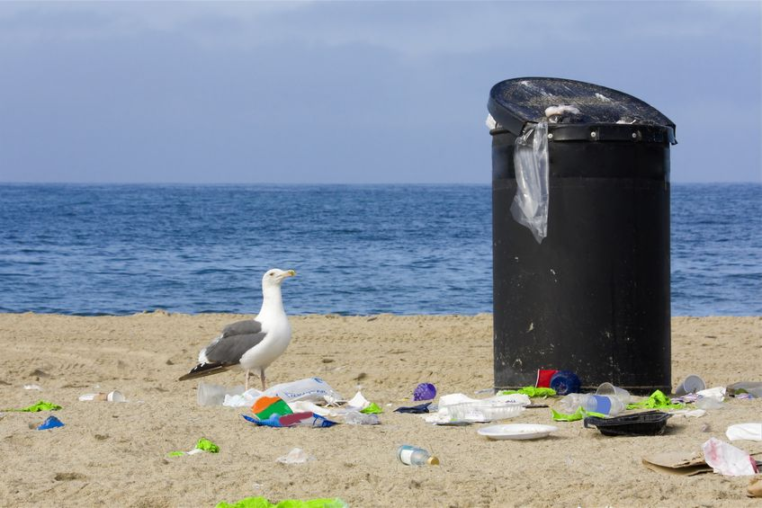15115130 - contemplating the trash  a curious seagull looks at an overflowing trashcan on the beach