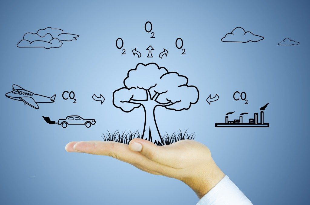 21853530 - hand with tree decrease global warming, photosynthesis, carbon dioxide, oxygen